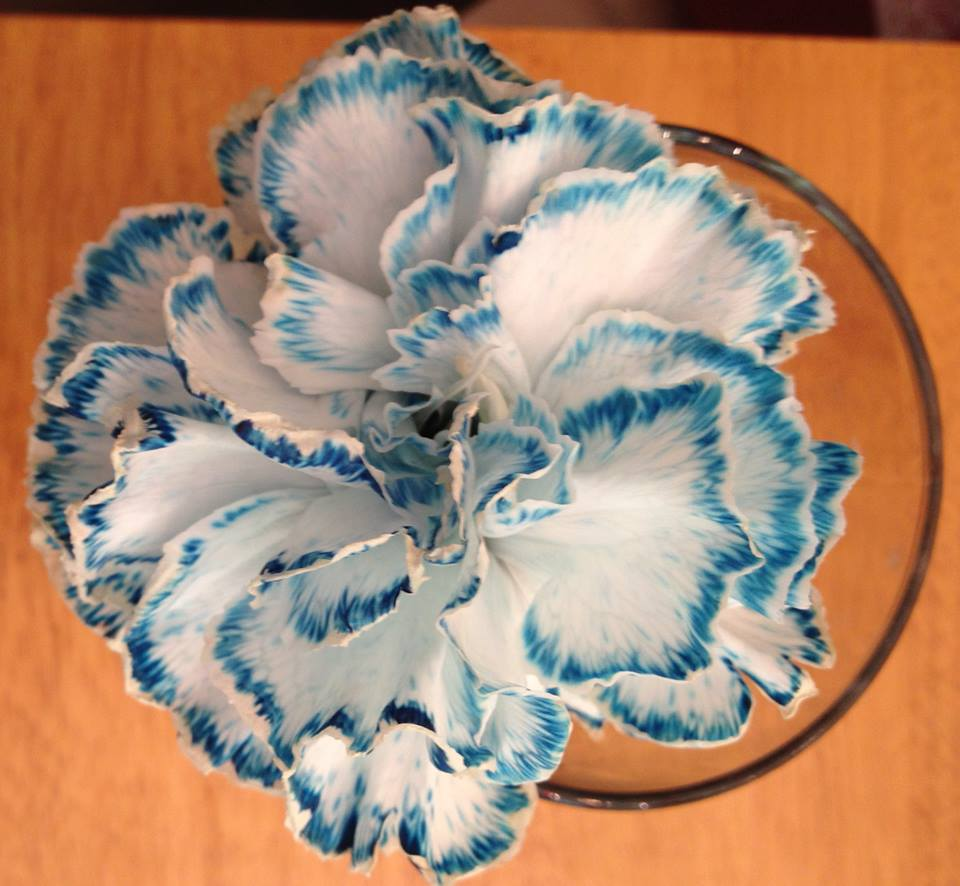 How To Make Colored Carnations