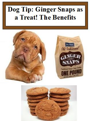 Dog Tip Ginger Snaps